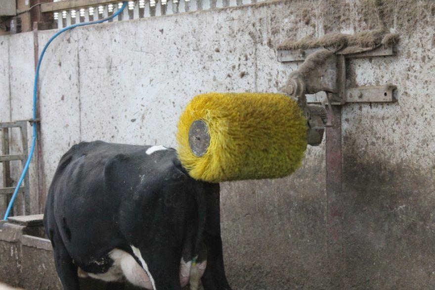 Roto Scratch Brush - Cowcare Systems
