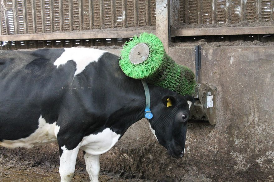 ComfyCow Scratch Brush - Cowcare Systems